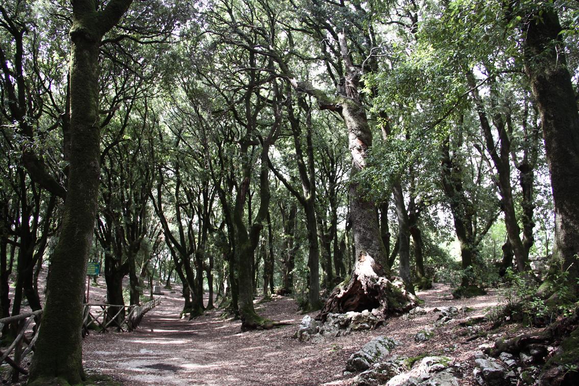 bosco sacro (2)_ok_web