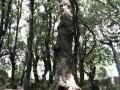 bosco sacro (4)_ok_web