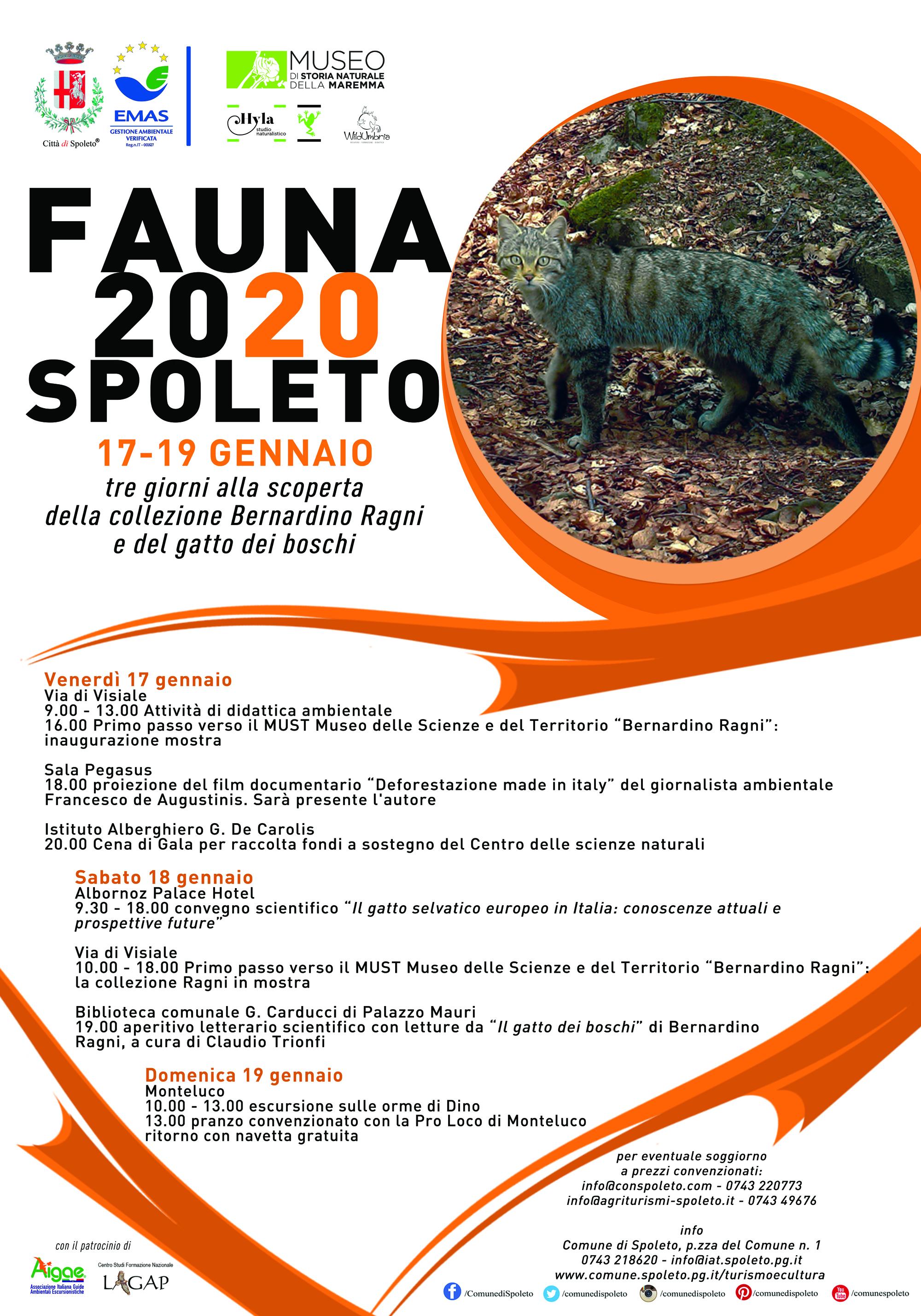 <!--:it-->FAUNA 2020 SPOLETO | Tre giorni alla scoperta della collezione Bernardino Ragni e del gatto dei boschi<!--:--><!--:en-->FAUNA 2020 SPOLETO | Three days to discover the Bernardino Ragni collection and the wildcat <!--:--> @ Spoleto