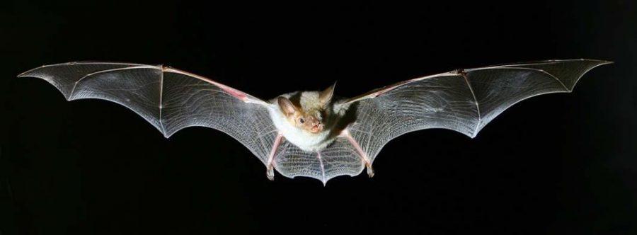 """<!--:it-->BAT NIGHT ed escursione al Centro Visita """"Vallotta""""<!--:--> @ Monteluco"""